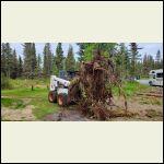 Stump_pulling.jpg