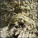 ugly lizard