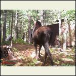 moose_sept.jpg