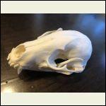 Skull After