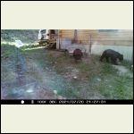 Bear72121847am_r.jpg