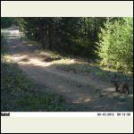 20120510_Bobcat.JPG
