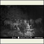 big ol' elk family