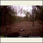 our first deer photo