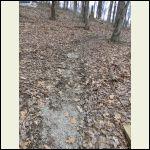 Muddy cabin path