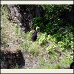 Mr. black bear