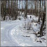 snowshoeing up our lane