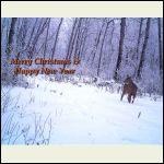 hoar frost deer