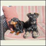 dog days in the sun