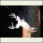 trail cam in velvet