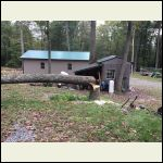 Tree cut down