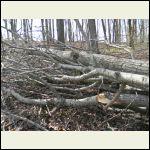 Broken section of tree