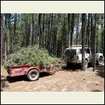 hauling slash at our cabin