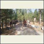 JJ_Horses.jpg