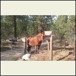 JJ_Horses_2.jpg
