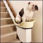 Dog_lift.jpg
