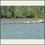 100's of Turtles on every log out there!