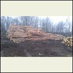 Red pine cull piles