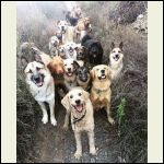 doggie_heaven.jpg