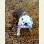 Gadget stealing frisbee at cabin