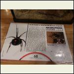 Spider display card