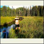 Hunting bare