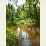 A small beaver pond on the property