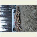 Pile of Logs for Lumber
