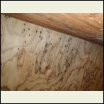 moldy plywood subfloor