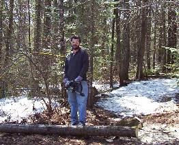 Clearing Cabin Site with Chainsaw Picture